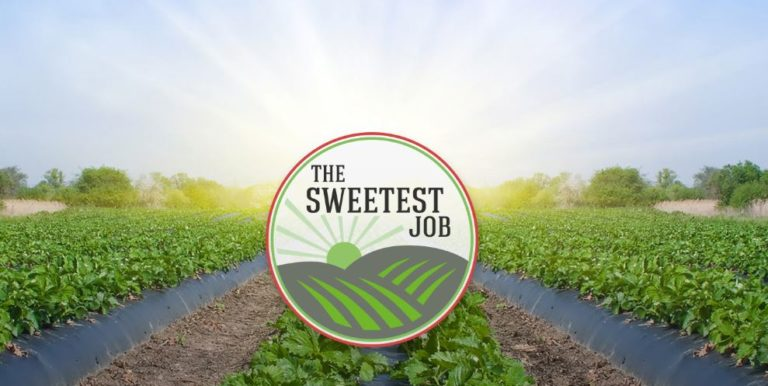 Regional Development Australia Northern Territory – Pick yourself a sweet job – in the NT's Mango Industry